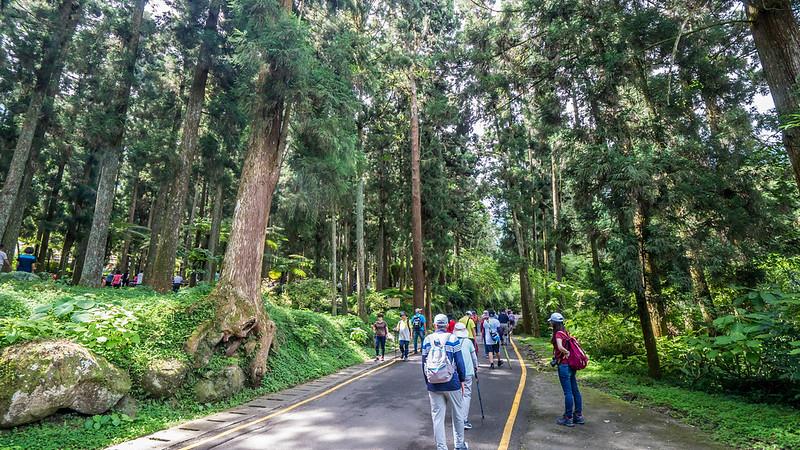 溪頭自然教育園區-林道
